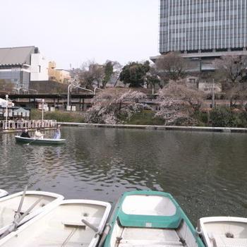東京の桜は、三分咲き
