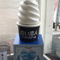 白い恋人ソフトクリーム&羊乳アイス〜さっぽろ羊ヶ丘展望台〜【北海道旅行①】