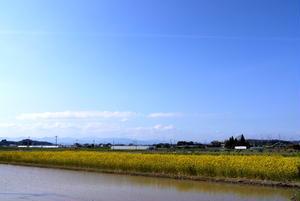 菜の花と田んぼのコラボ。3月に田植えをする宮崎ならではの風景。<br><br>小春ちゃんさん『ぽかぽ...