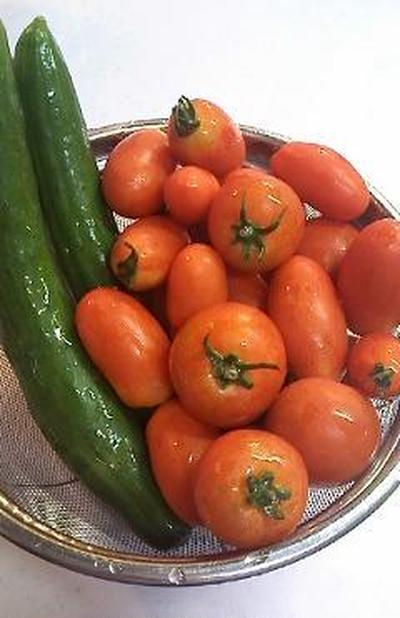 ご近所さんの無農薬野菜♪&ラスク2種