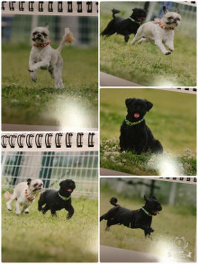 飛行犬のカレンダーとうれしいリンク
