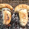松茸(カナダ産)の炭火焼