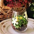 掲載レシピ*クリスマスのグラスサラダ