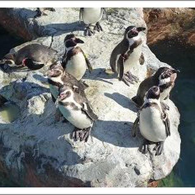 ペンギンとイルカとしらすいくらごはん