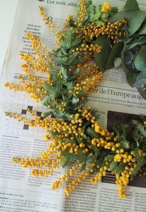 ※1日経つと、画像左のようにふわふわの花は萎んでしまいますが、鮮やかな黄色は美しいままドライフラワー...