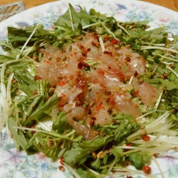 茨城県産真鯛と水菜でカルパッチョ 超シンプルに