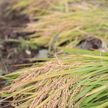 2018年【広島東洋カープ】大瀬良大地選手に世羅のお米を届けよう! 後援会~昼食編~