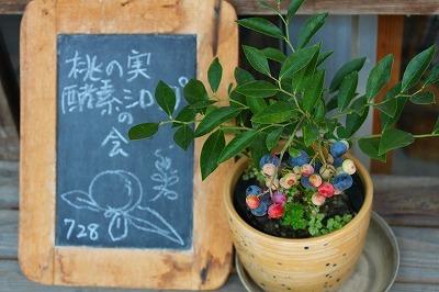 桃の実 酵素シロップの会♪♪