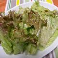 韓国人直伝の野菜料理!!サニーレタスのセンチェ