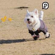 【犬とおでかけ】十国峠ドッグラン