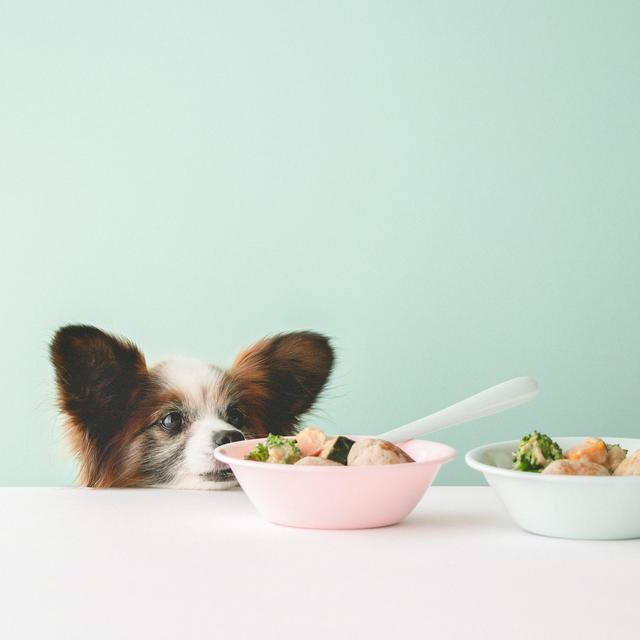 ちょっと特別な日にも♡肉団子と野菜あんかけの犬ごはん