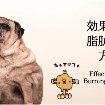 イラストで超良く分かる運動で効率的に脂肪燃焼する方法
