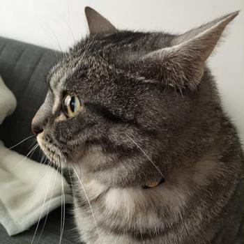 猫氏の横顔