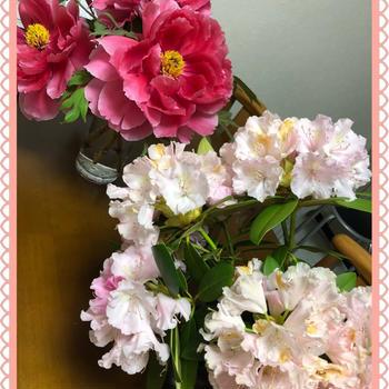 牡丹と石楠花とメカルドニア ゴールドダスト