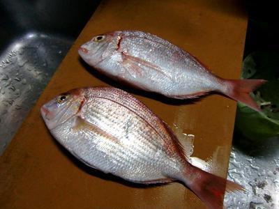 鯛のグリル焼きとジャガイモのマスタード炒め