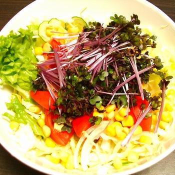 紫キャベツのスプラウトのサラダ