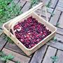 【シンボルツリー】ジューンベリーの実!6年目の収穫&シロップ作り♪