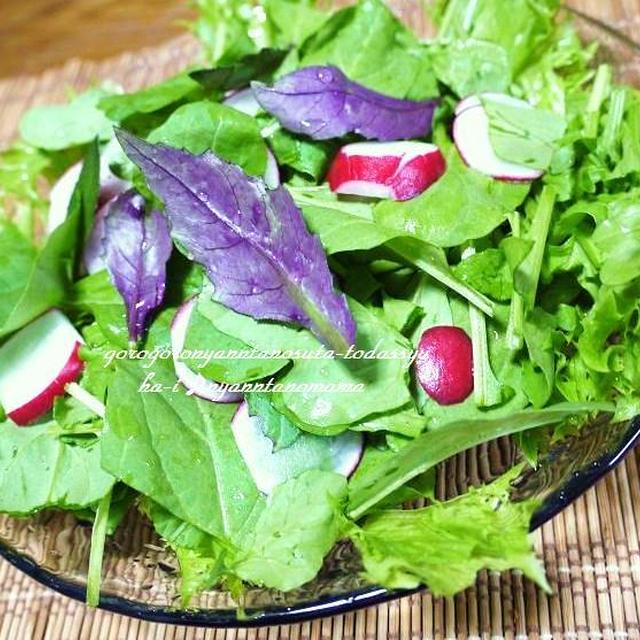 美人草をお料理<美人草とルッコラのサラダ><美人草と小かぶの酢のもの> ミィーちゃんお外が気ちいいね