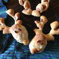 トナカイのパン③。よぼよぼやん、でもオニオングラタンスープはヨカッタ☺️