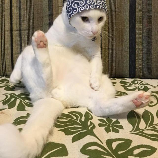 【猫】泥棒猫とたわむれるの巻 vol.182