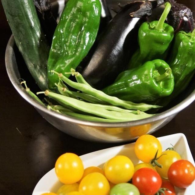 ■Myファーム便り【本日収穫のミニトマト・茄子・胡瓜・平サヤインゲン】/草取り
