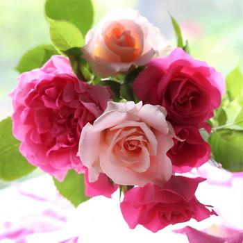 今年のバラたち ①