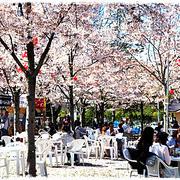 ■ そうだ、赤ちゃんと西公園にお花見に行こう~♪ヾ(・ω・`)ノ ■