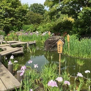 大仙公園~日本庭園の花しょうぶ