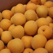 完熟オレンジ梅 丸の内で昼飲み