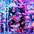 日本橋アートアクアリウム2019~江戸・金魚の涼~に行ってきました!