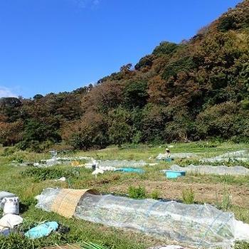 葉山農園(10月初旬)☆耕運機