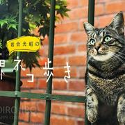 【世界ネコ歩き】写真展へ
