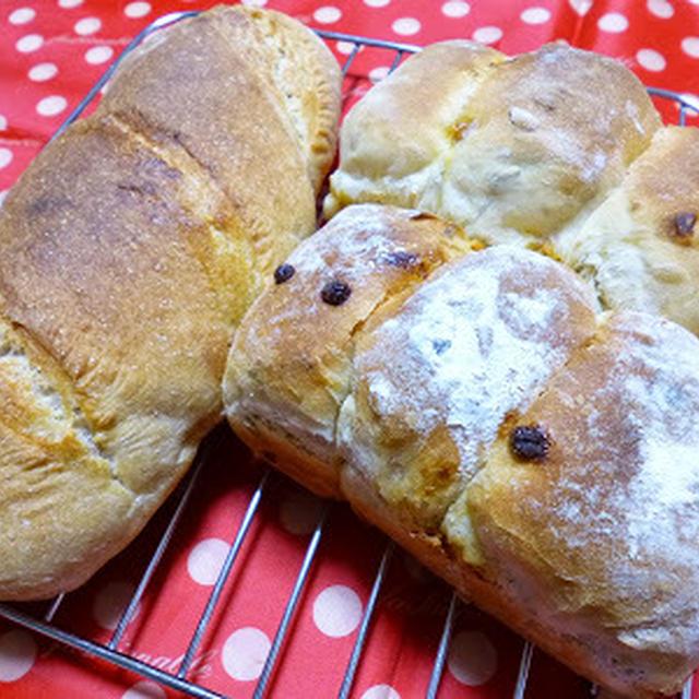 【パン】ずんぐりむっくりのバゲットと、キャラメルチョコチップとシードのパン。