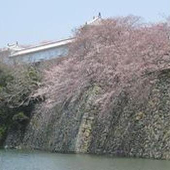 南石的花見会☆姫路城~シロトピア公園で桜と美味しい酒で大宴会