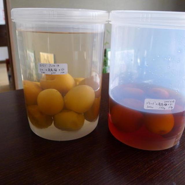 まだ間に合う!!:南高梅 梅酒とブランデー梅酒(和歌山県産)
