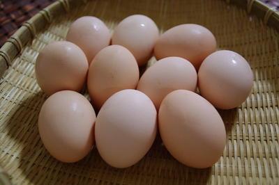 鶏の女王・烏骨鶏が産んだ 幻の卵