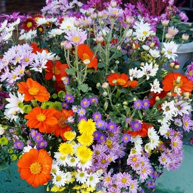 ■【自家製ドライトマトと餡子入りの蒸しパン/Myファームの花達】23日は主人の命日でした♪