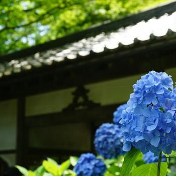 とく散歩17(鎌倉~江ノ島 No.1)