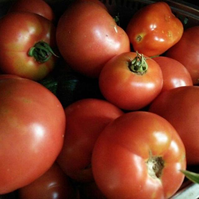 7月22日。トマト祭り状態(笑)