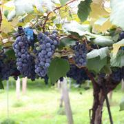 猛暑で気を付けたいワイン事情