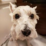 お風呂に入れた夫の感想。 ~お風呂チャレンジ 6月17日編~