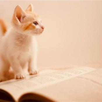 love kitten
