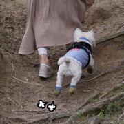 【犬】犬の期待に応えたい飼い主。  だが・・・