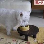 パクチーを食べる犬