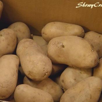 今年は質より量でジャガイモはメークイン一本勝負です(`・ω・´)シャキーン