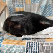 今日の一枚・黒猫は人気がないのか