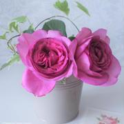 """うっとり~♪今が旬!憧れの""""香りのバラ""""を素敵に飾るハウツー"""
