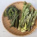 【山菜】ぜんまいの照り焼き