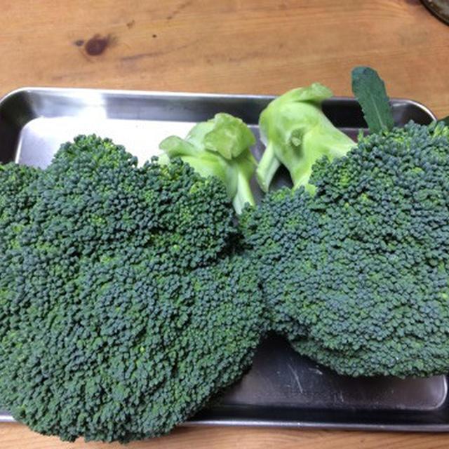 【12月の旬野菜の料理教室】ブロッコリーをとことん味わおう