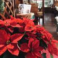 """シェ・ヤマライよりクリスマスのお知らせです""""Christmas☆in Chez yamarai"""""""